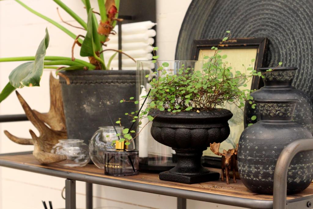Potteplantene hjemme hos deg – så viktige er de!