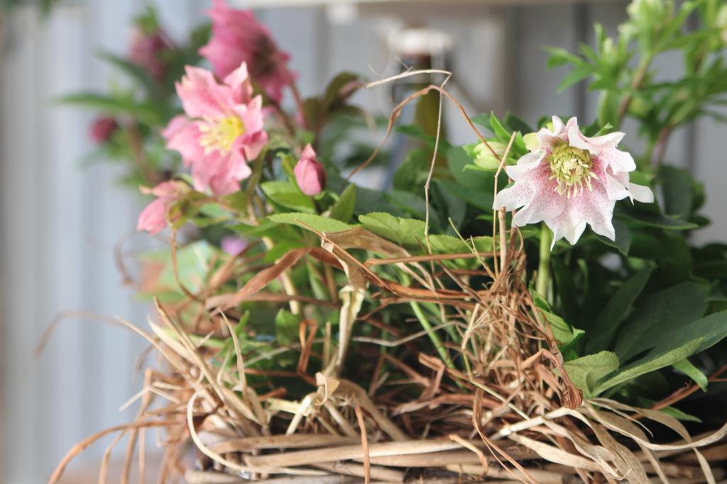 Tre vekster som passer i hagestuen