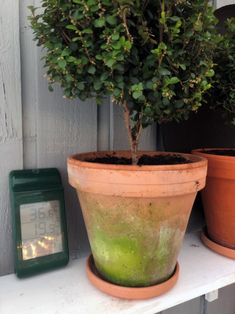 termometer og planter i hagestuen