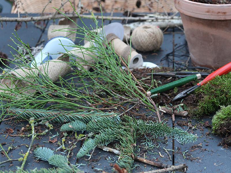 granris og vintergrønt